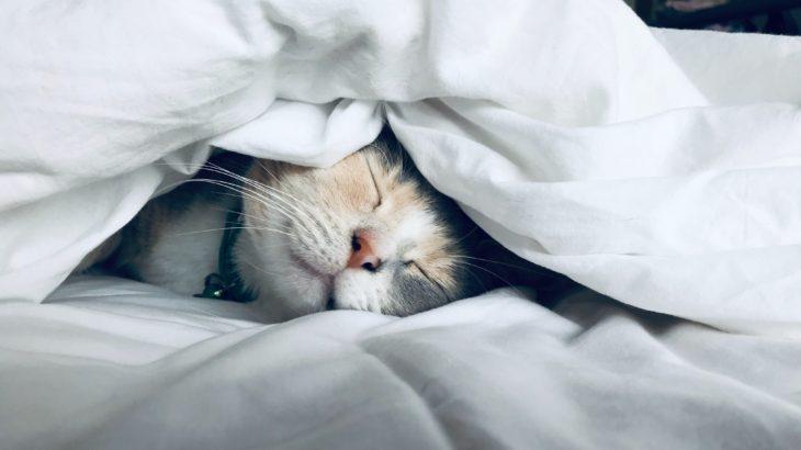 睡眠の質を科学的に改善【2~3週間で劇的に進化】